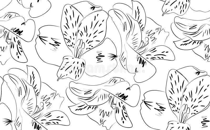 Fleurs sans couture d'alstroemeria de modèle illustration de vecteur