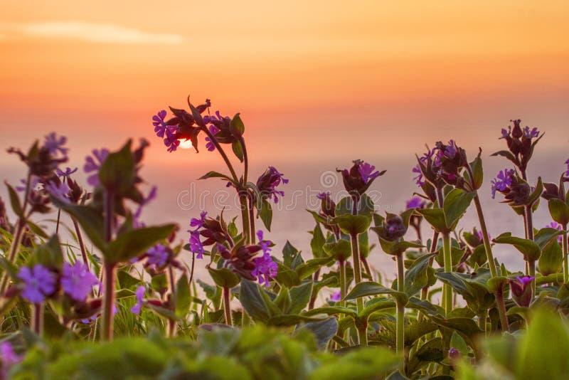 Fleurs sauvages à l'aube image libre de droits