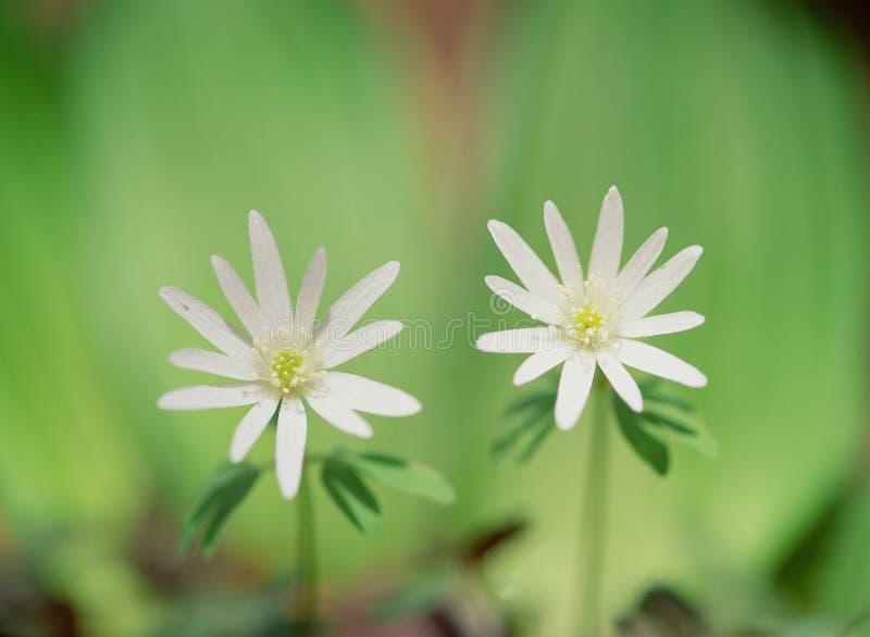 Fleurs sauvages photo stock