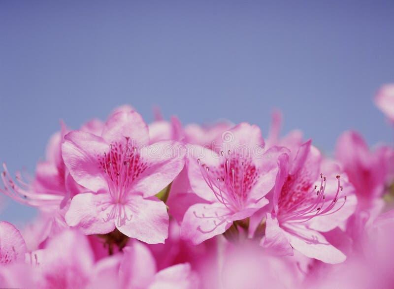 Fleurs sauvages photos stock