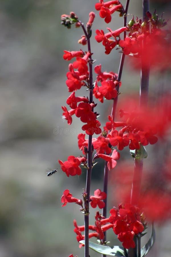 Fleurs sauvages image libre de droits