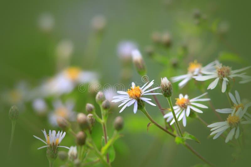 Fleurs sauvages images libres de droits