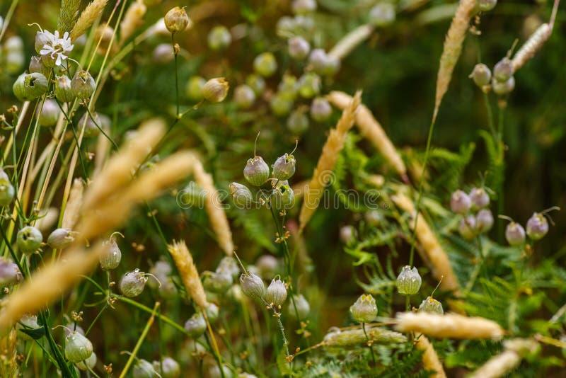 Fleurs sauvages après une douche de pluie, foyer sélectif images libres de droits