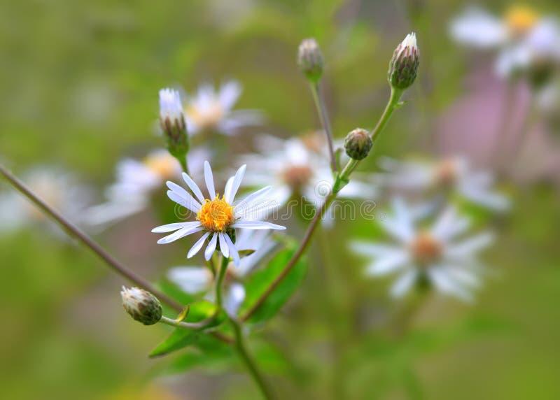 Fleurs sauvages au Michigan photo libre de droits