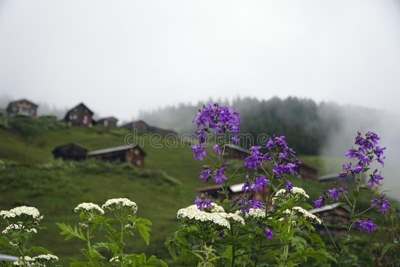 Fleurs sauvages avec des huttes au plateau de Pokut chez Rize image stock