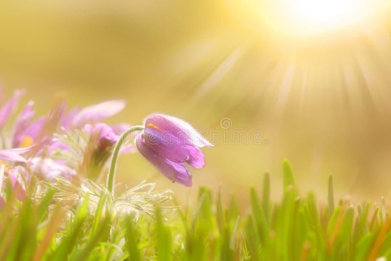Fleurs sauvages avec la fusée du soleil photo stock