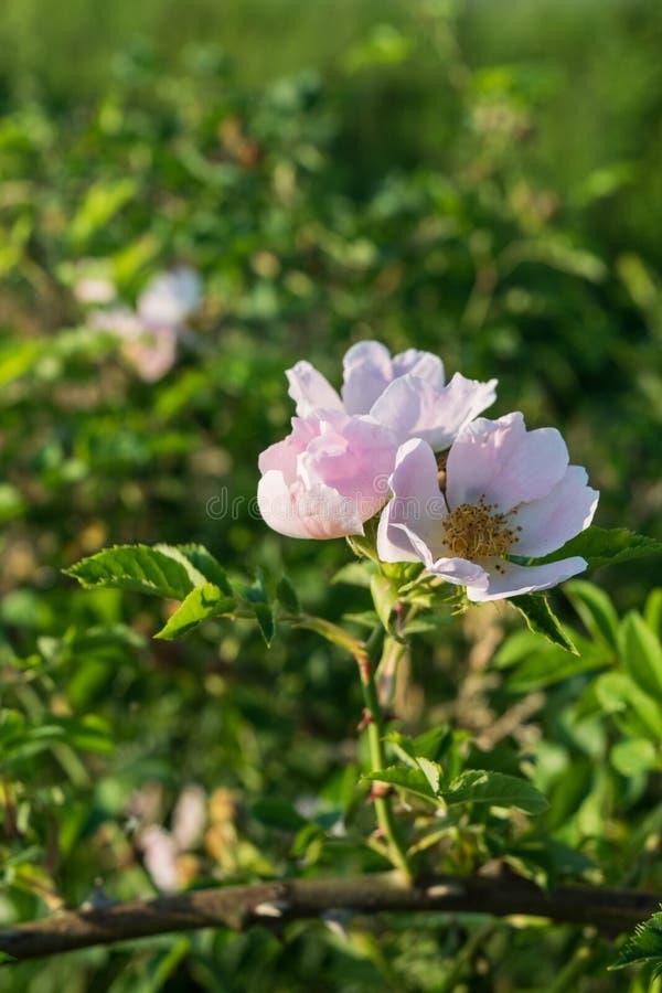 Fleurs sauvages dans le domaine entouré avec les mauvaises herbes et l'herbe sèche images stock