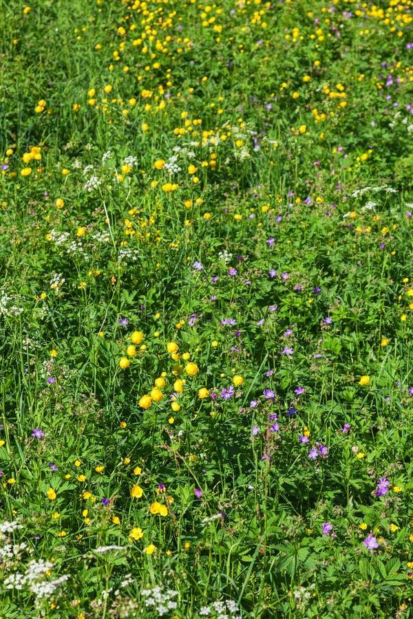 Fleurs sauvages dans le pré image stock