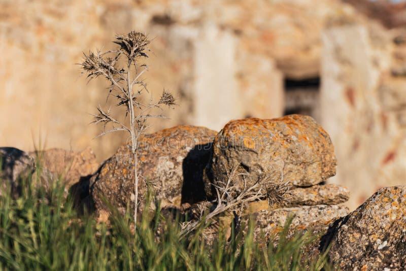 Fleurs sauvages dans le premier plan avec des pierres avec la rouille jaune et mur en pierre à l'arrière-plan au coucher du solei photos libres de droits