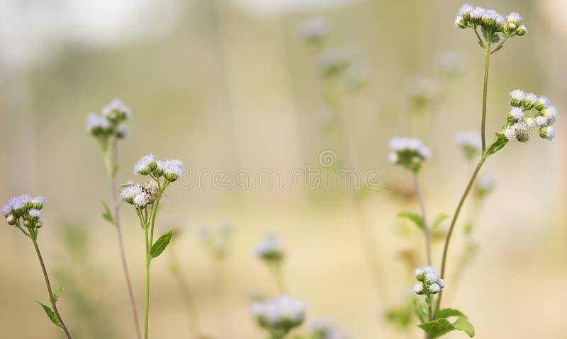Fleurs sauvages de champ de fond australien de ressort photos stock