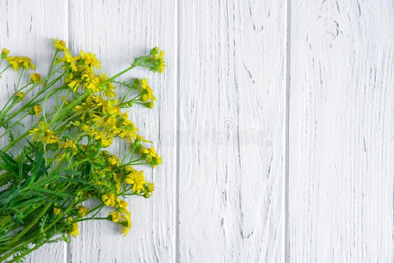 Fleurs sauvages de couleur jaune avec un endroit pour une inscription sur un fond en bois clair Carte de voeux avec des wildflowe photographie stock libre de droits