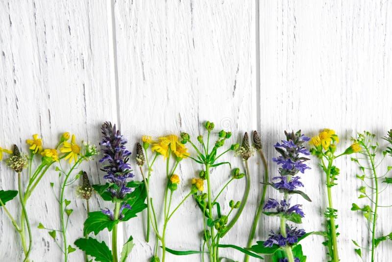 Fleurs sauvages de couleur jaune avec un endroit pour une inscription sur un fond en bois clair Carte de voeux avec des wildflowe images libres de droits