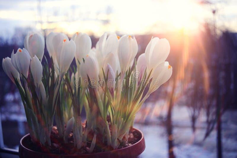 Fleurs sauvages de premier ressort photographie stock libre de droits