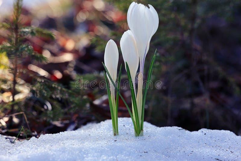 Fleurs sauvages de premier ressort photo stock