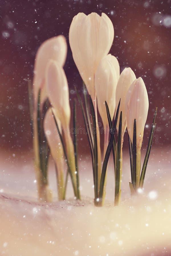 Fleurs sauvages de premier ressort photographie stock