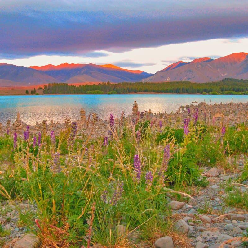 Fleurs sauvages de ressort sur les rivages du lac Tekapo, Nouvelle-Zélande photographie stock libre de droits