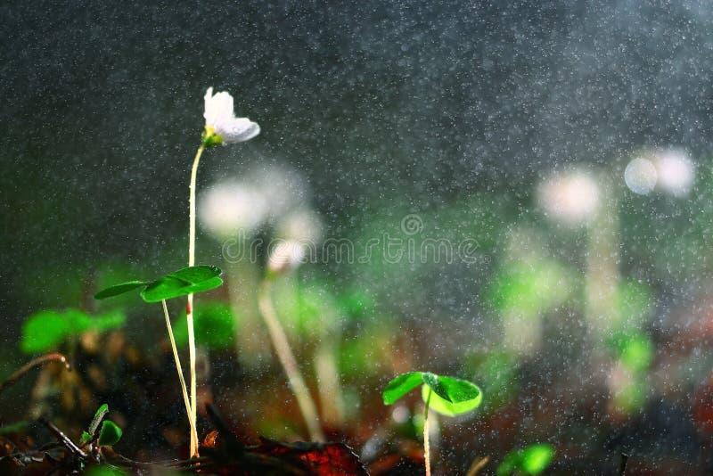Fleurs sauvages de source photo stock