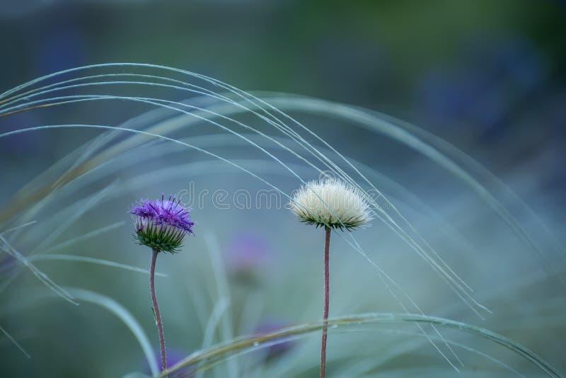 fleurs sauvages de steppe image libre de droits