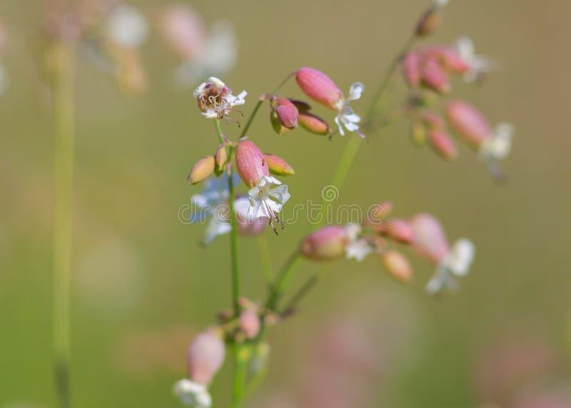 Fleurs sauvages du Michigan images libres de droits