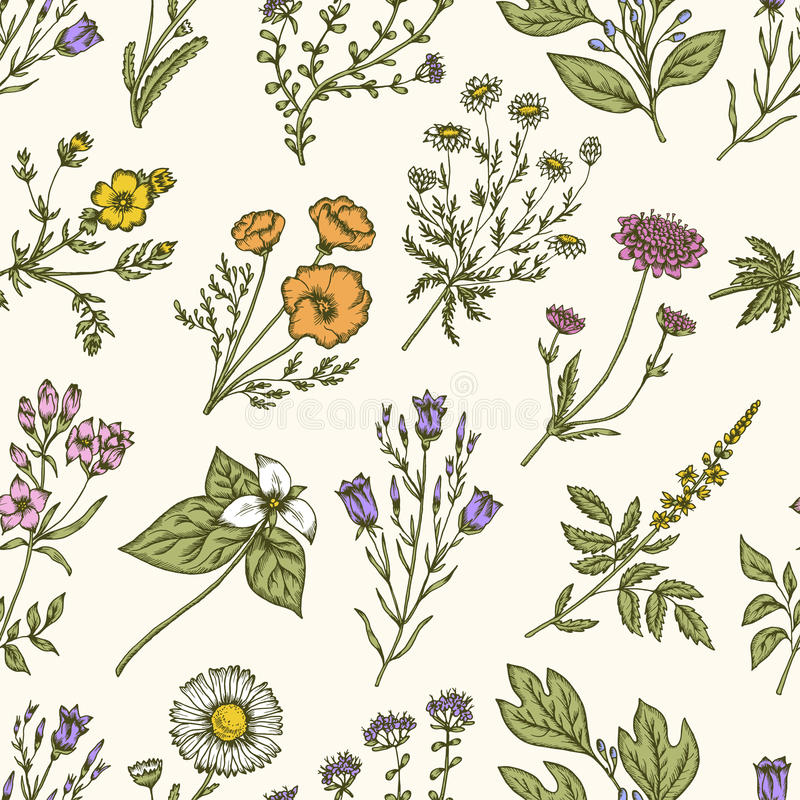 Fleurs sauvages et herbes Configuration florale sans joint Illustration de vintage de vecteur illustration de vecteur