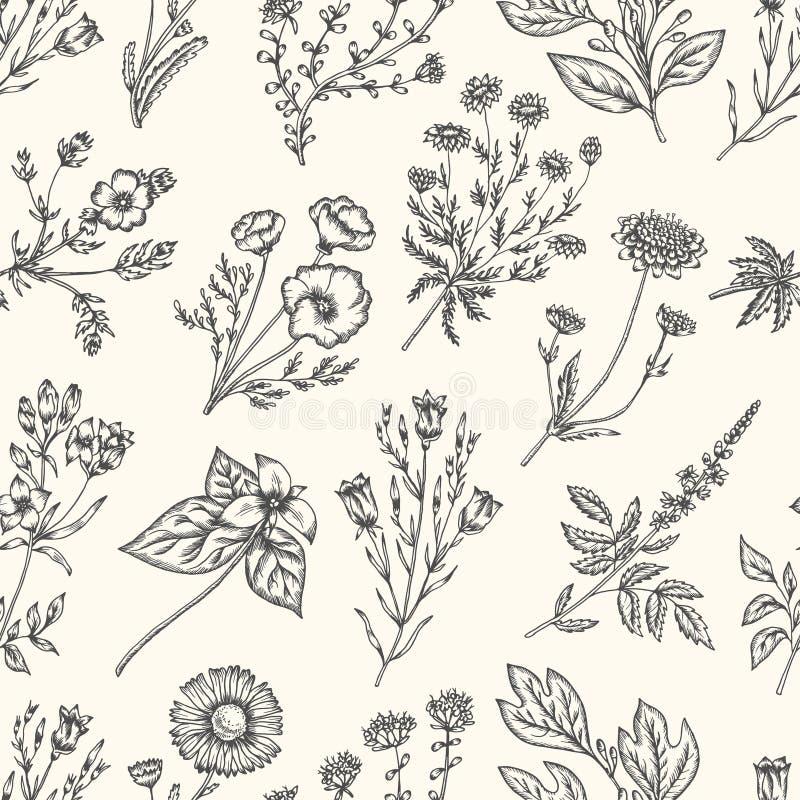 Fleurs sauvages et herbes Configuration florale sans joint Illustration de vintage de vecteur illustration stock