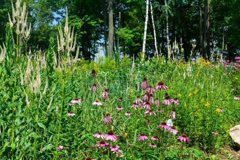 Fleurs sauvages et herbes poussant au bord d'une forêt image stock
