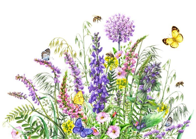 Fleurs sauvages et insectes d'aquarelle illustration stock