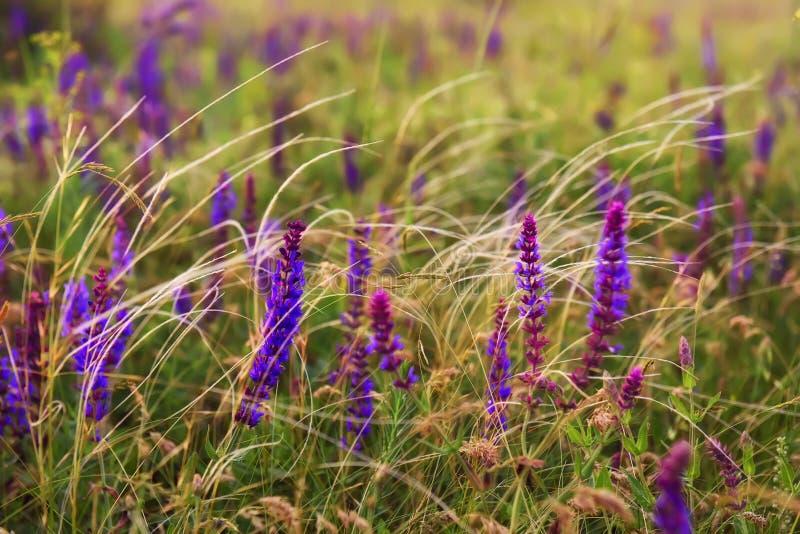 Fleurs sauvages et plume de prairie photographie stock libre de droits
