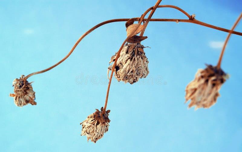 Fleurs sauvages et tiges d'image artistique d'herbe morte sèche image stock