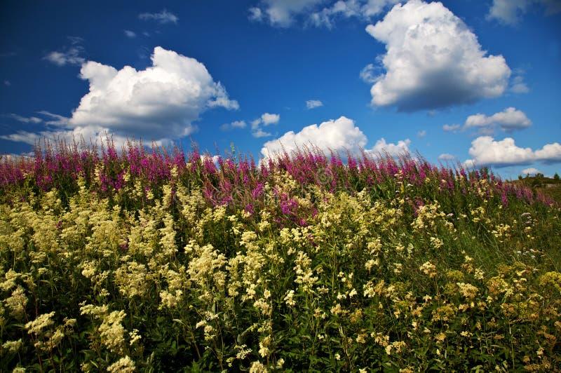 Fleurs sauvages et un ciel partiellement nuageux images libres de droits