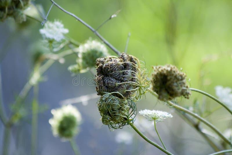 Fleurs sauvages sèches images stock