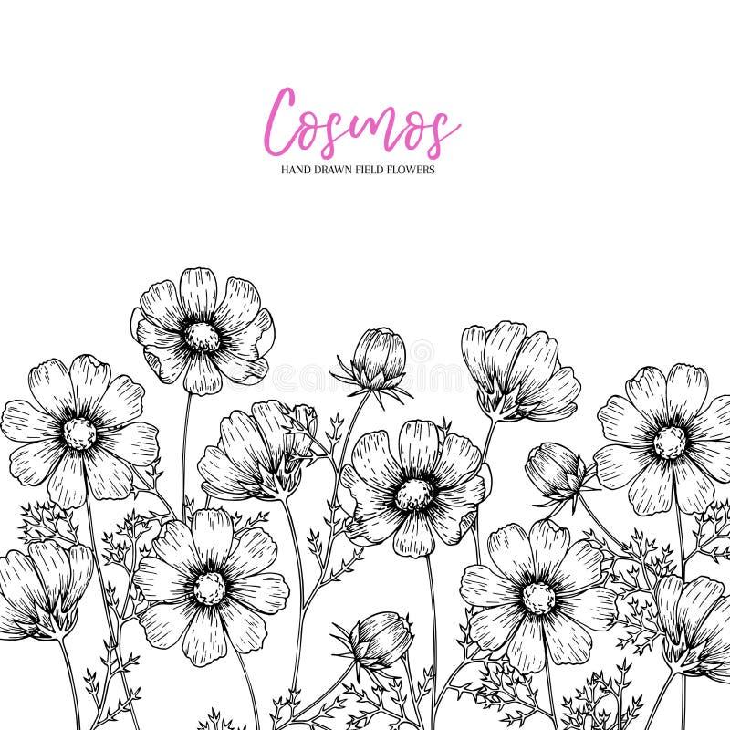 Fleurs sauvages tirées par la main de foin Fleur de cosmos Herbe médicale Art gravé par vintage Composition en frontière Bon pour illustration de vecteur