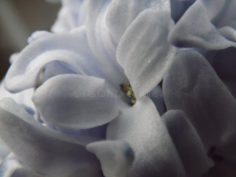 Fleurs sensibles image stock