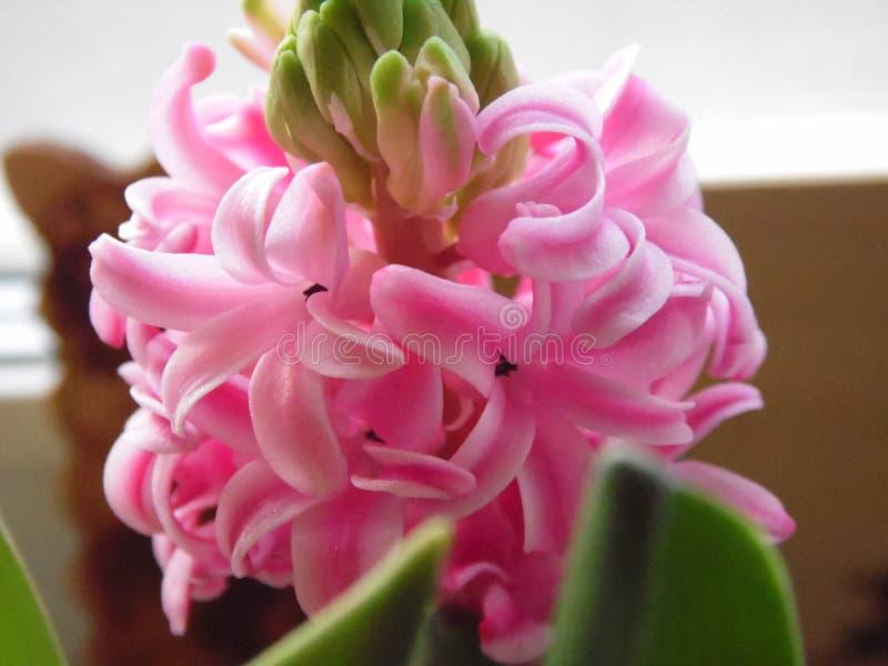 Fleurs sensibles photographie stock