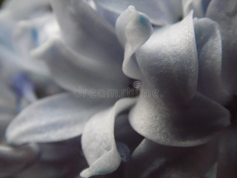 Fleurs sensibles photo stock