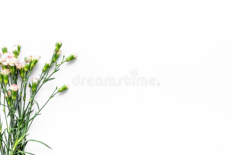 Fleurs sensibles de source Petit oeillet rose sur l'espace blanc de copie de vue supérieure de fond images libres de droits