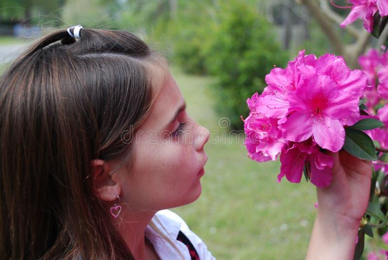Fleurs sentantes photo stock