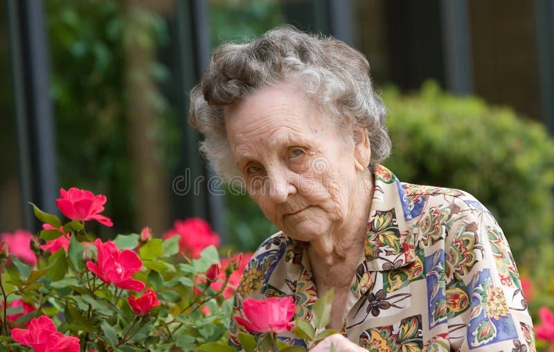 Fleurs sentantes de femme âgée images stock