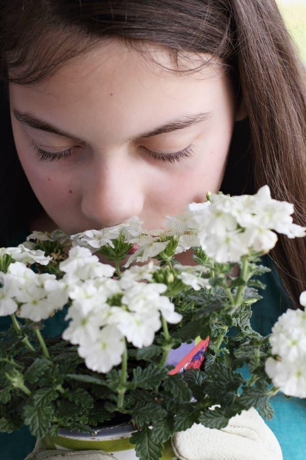 Fleurs sentantes de verveine de fille de jeune adolescent photo libre de droits