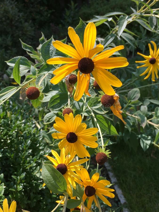 Fleurs simples dans Sun jaune photographie stock libre de droits