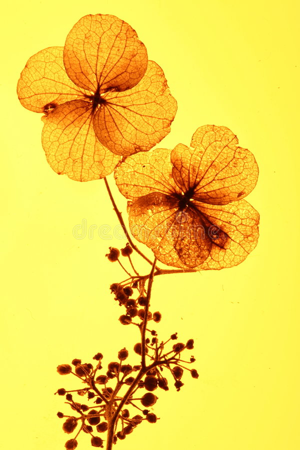 Fleurs sur Bush photo stock