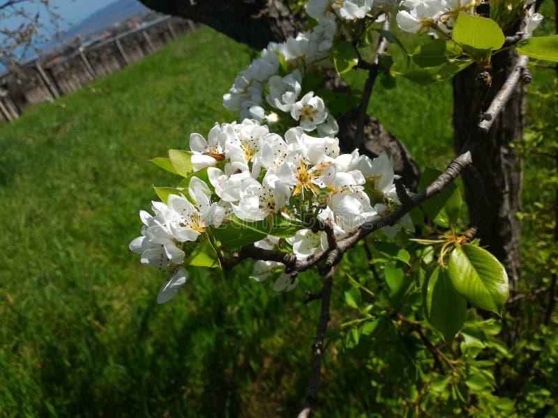Fleurs sur des arbres dans les plaines photo stock
