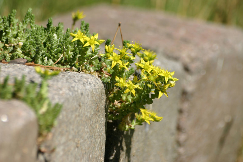 Fleurs sur la pierre photographie stock