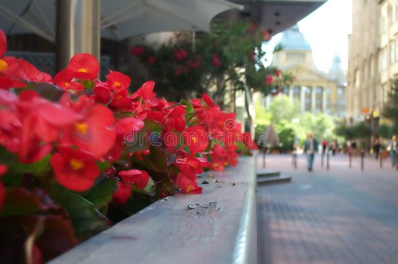 Fleurs sur la rue d'affaires photos libres de droits