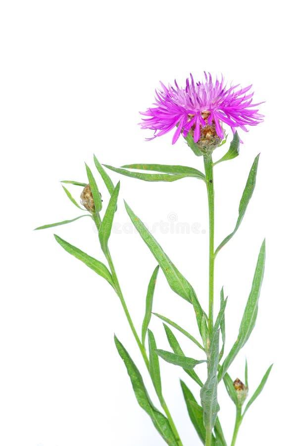 Fleurs sur le blanc image stock