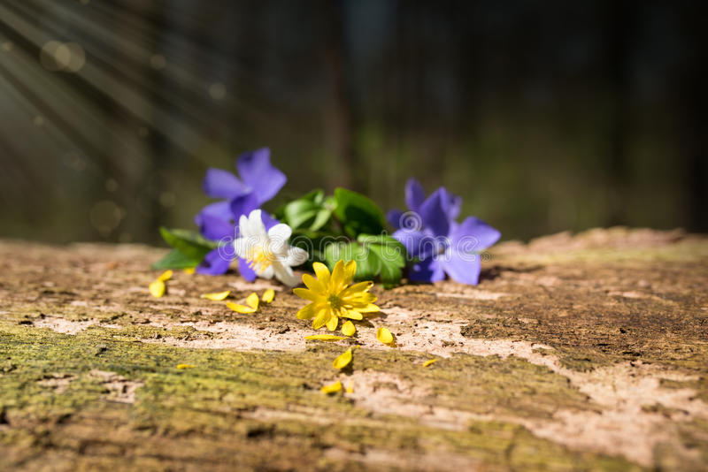 Fleurs sur le bois superficiel par les agents image libre de droits