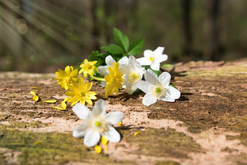 Fleurs sur le bois superficiel par les agents photos libres de droits