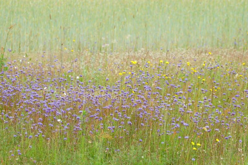 Fleurs sur le bord de la zone photographie stock libre de droits