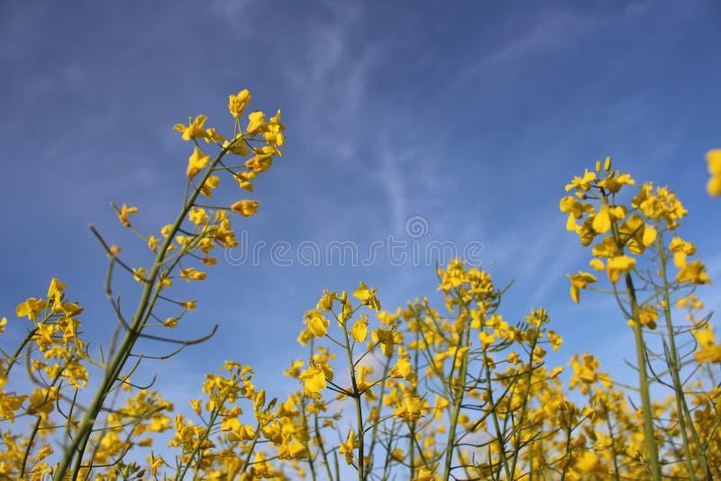 Fleurs sur le champ photographie stock libre de droits