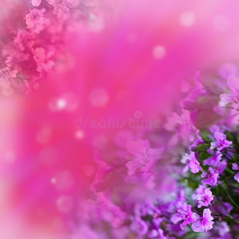 Fleurs sur le fond abstrait rose image stock